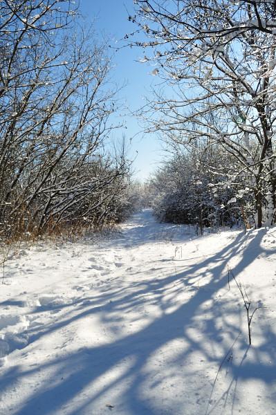 A sunny walk in snowy Quebec - Food Gypsy