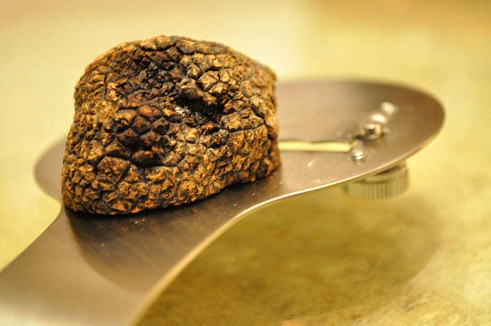 Black Périgord Truffle - Food Gypsy