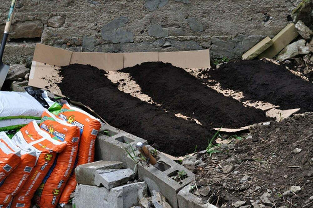 Cardboard Gardening Basics - Food Gypsy