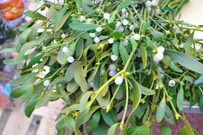 Mistletoe, outdoor market - Food Gypsy